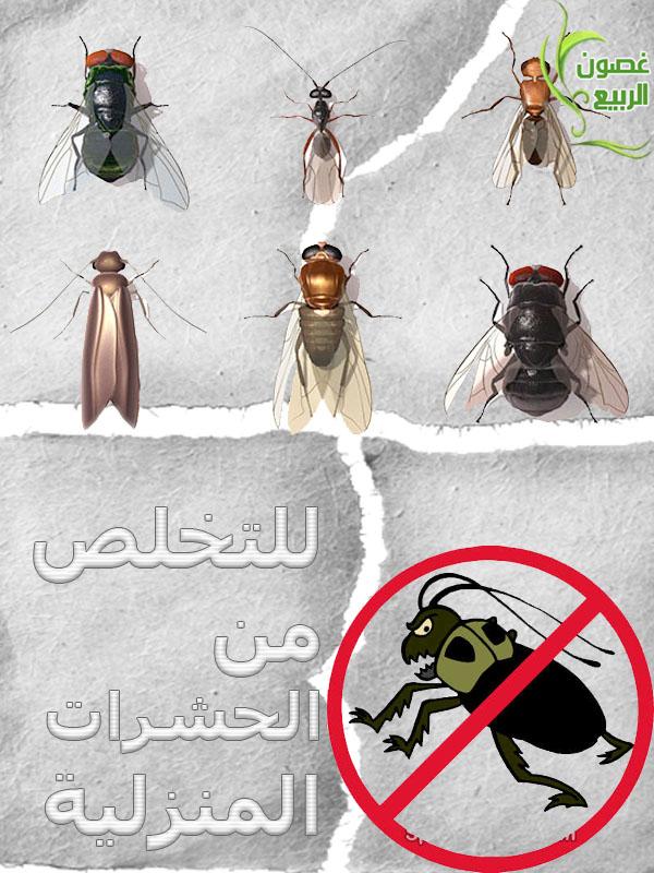 اكثر من طريقه للتخلص من الحشرات الطائره والزاحفه 3_uuoo10.jpg