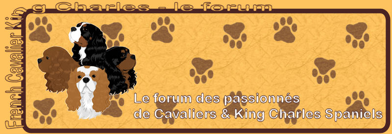 French Cavalier King Charles