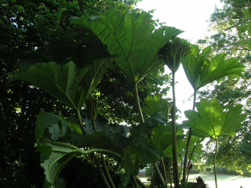 recherche plante type bord de rivi re