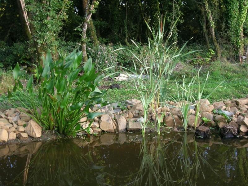 Recherche plante type bord de rivi re for Type de plante