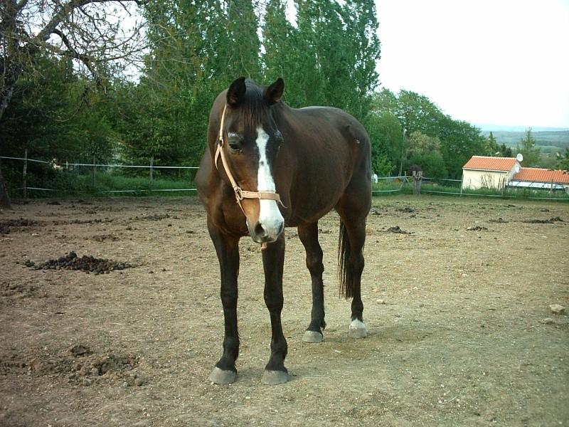 cheval espagnol a sauver