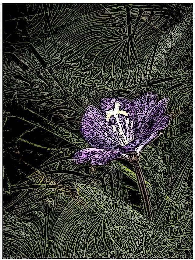 fleurd12.jpg