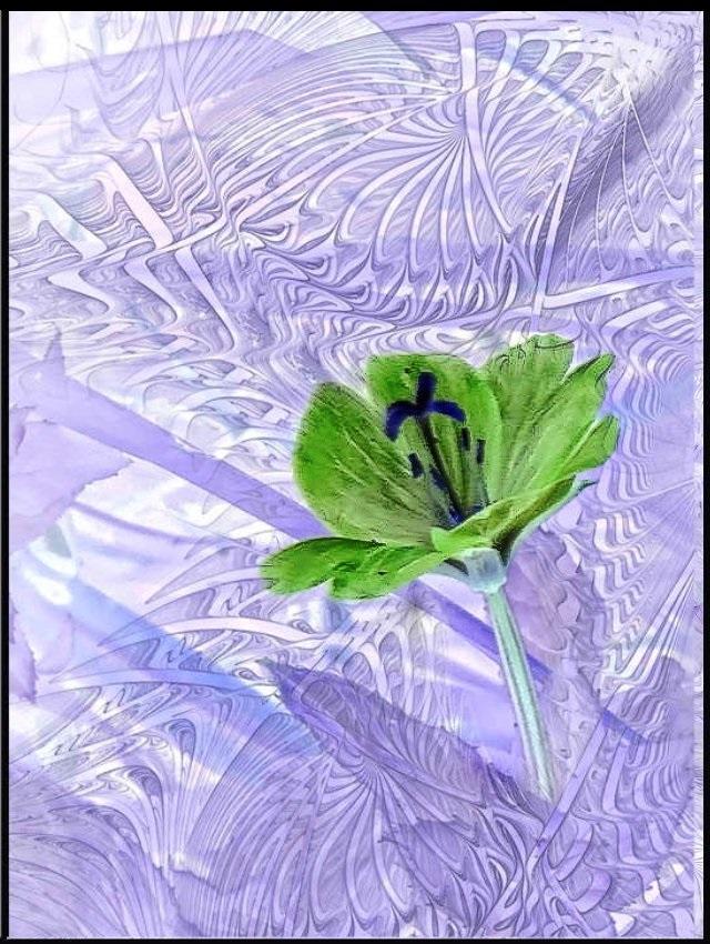 fleurd13.jpg