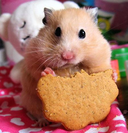 Hamsterici