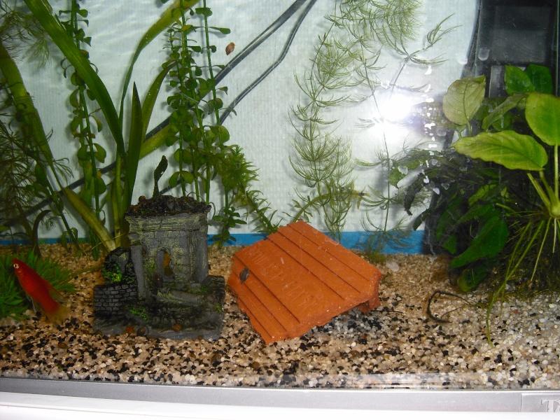 brique dans l\'aquarium
