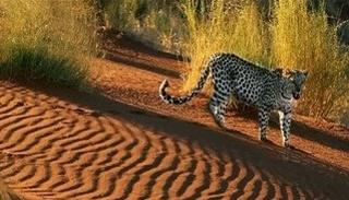 La piste des animaux