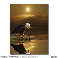 eagle10.png