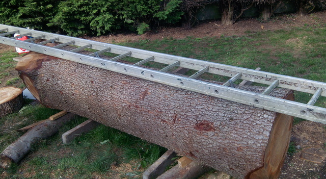 D bit d 39 un tronc de c dre la tron onneuse - Comment couper un arbre avec une tronconneuse ...