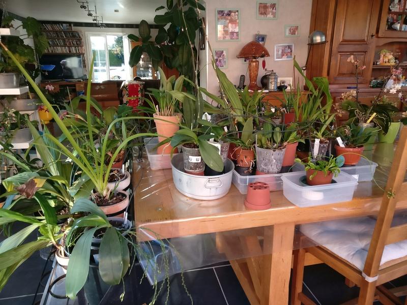 Arrosage automatique special vacances pour plantes d 39 interieur for Arrosage plante interieur