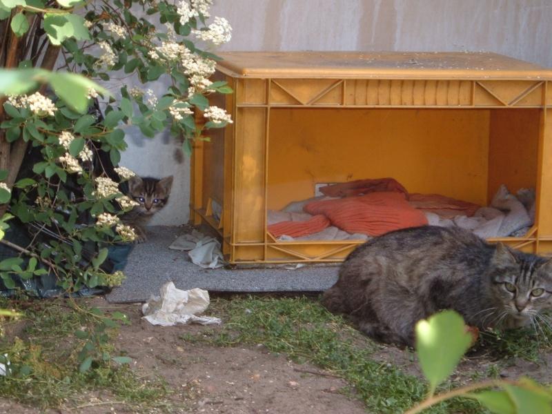 cr er un abri contre l 39 hiver pour les chats errants. Black Bedroom Furniture Sets. Home Design Ideas