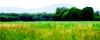 Forêts et plaines