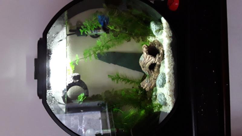 d butante volution de l 39 aquarium et demande votre avis. Black Bedroom Furniture Sets. Home Design Ideas