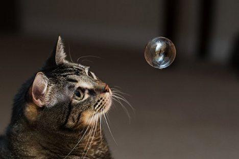 gatto_10.jpg