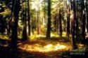 La Forêt Lumineuse