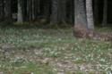 Le Bois Clairsemé