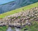 Le Territoire des Moutons
