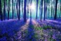 La Forêt de Fleurs