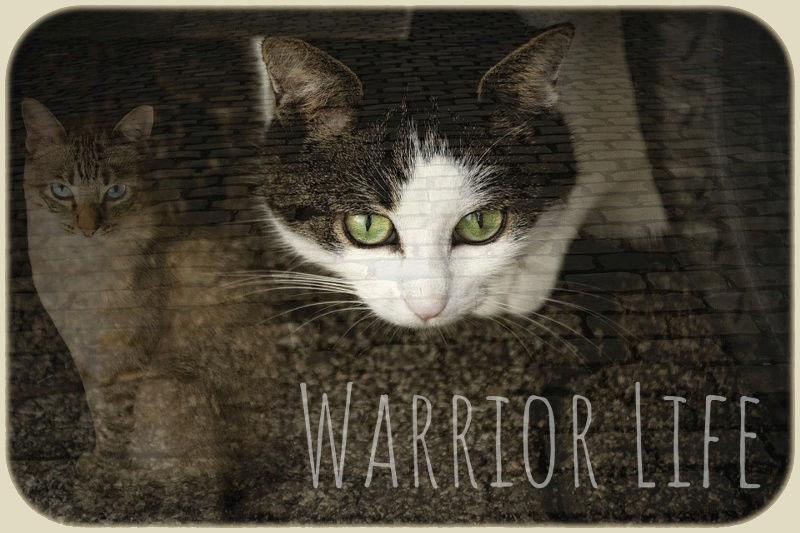 WarriorCats - Das Leben eines Kriegers