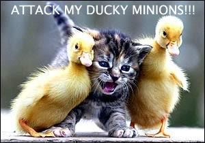 ducky211.jpg