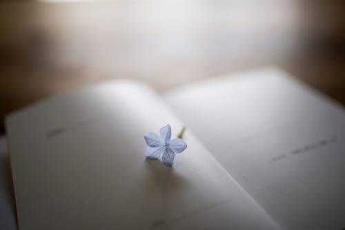 book_z10.jpg