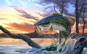 Bass Fishing Community