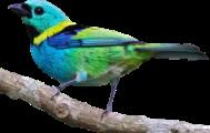 قسم الطيور الصغيرة عامة