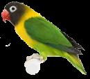 قسم طيور الحب