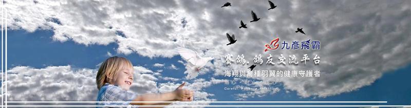 九彥飛霸_賽鴿.鴿友交流平台